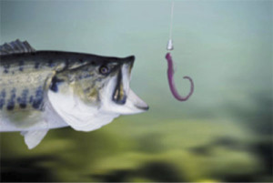 Fishing Guide from Reel Sharp Sport Fishing, hook it right!