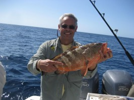 Massive Grouper fish caught near the Bahamas